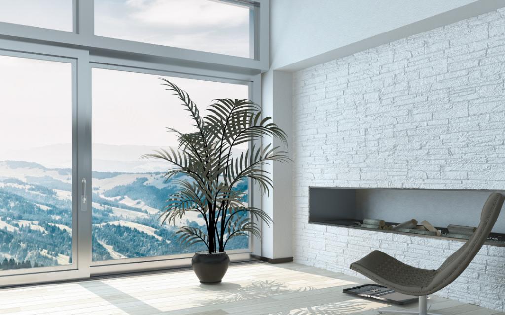 The Best Lighting for Indoor Palm Plants