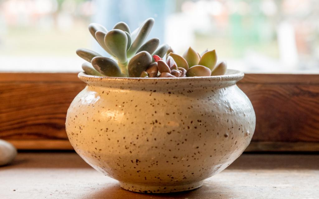 Supplemental Light for Flowering Succulents