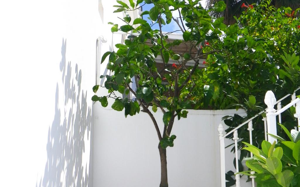 Indoor Lemon Trees Require Sunlight