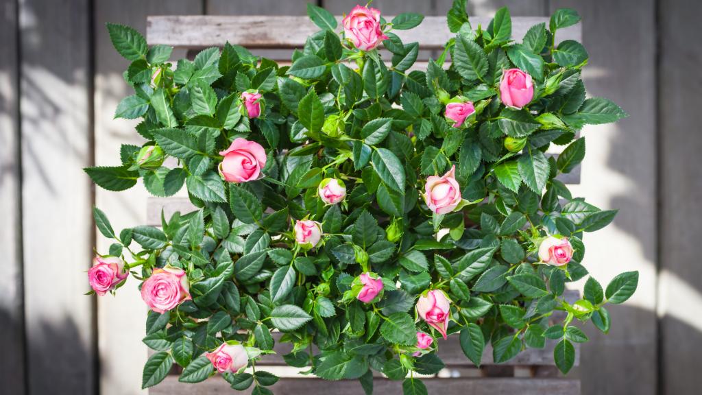 The Benefits of Growing Flowering Indoor Plants