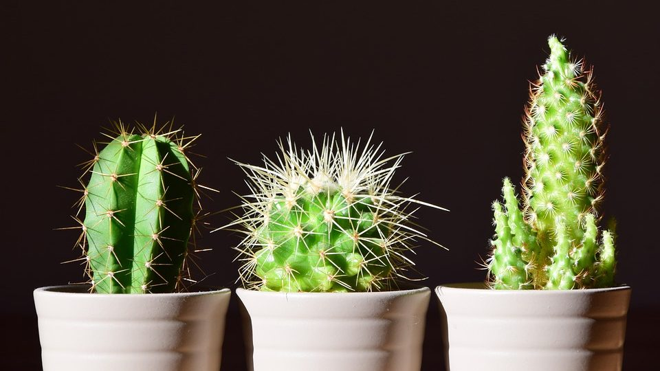 What Is The Best Type Of Cactus For Indoor Growing?