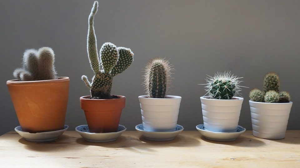 How to Grow Cactus Plants Indoors – The Wrap-up