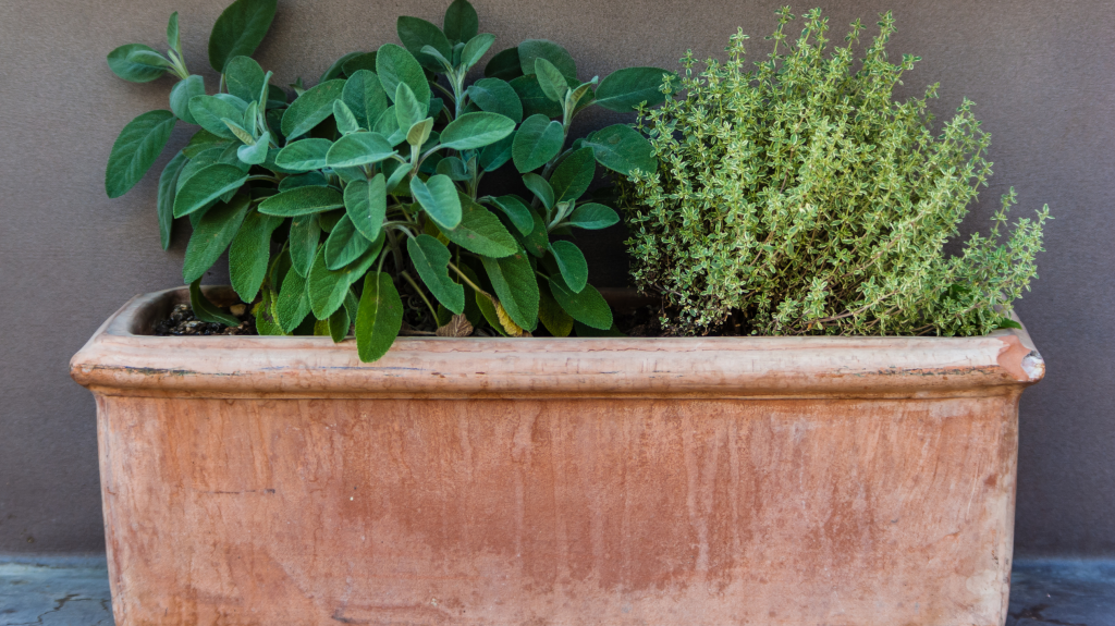 The Best Containers for Planting an Indoor Herb Garden