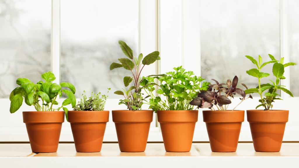 Methods for Hanging Your Herb Garden