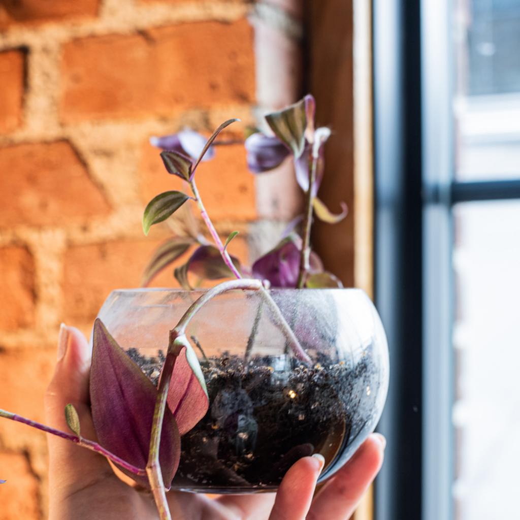 5 Best Indoor Plants for Beginners to Indoor Gardening