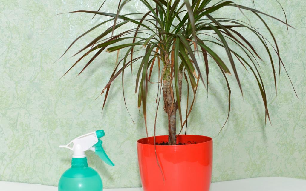 Growing Indoor Palm Plants - Water Requirements