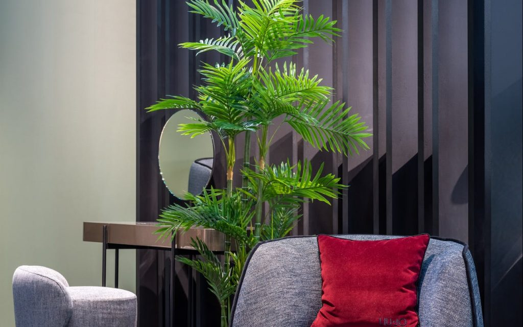 Secrets to Growing Indoor Palm Plants – The Wrap-up