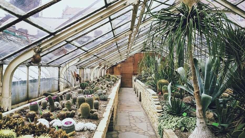 Propagating Cactus Plants