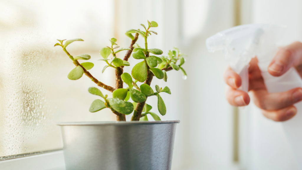 Watering Tips for Succulents
