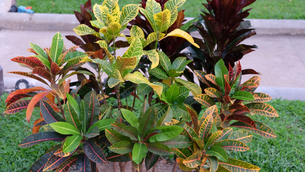 Houseplants with Colorful Leaves - The Wrap-up