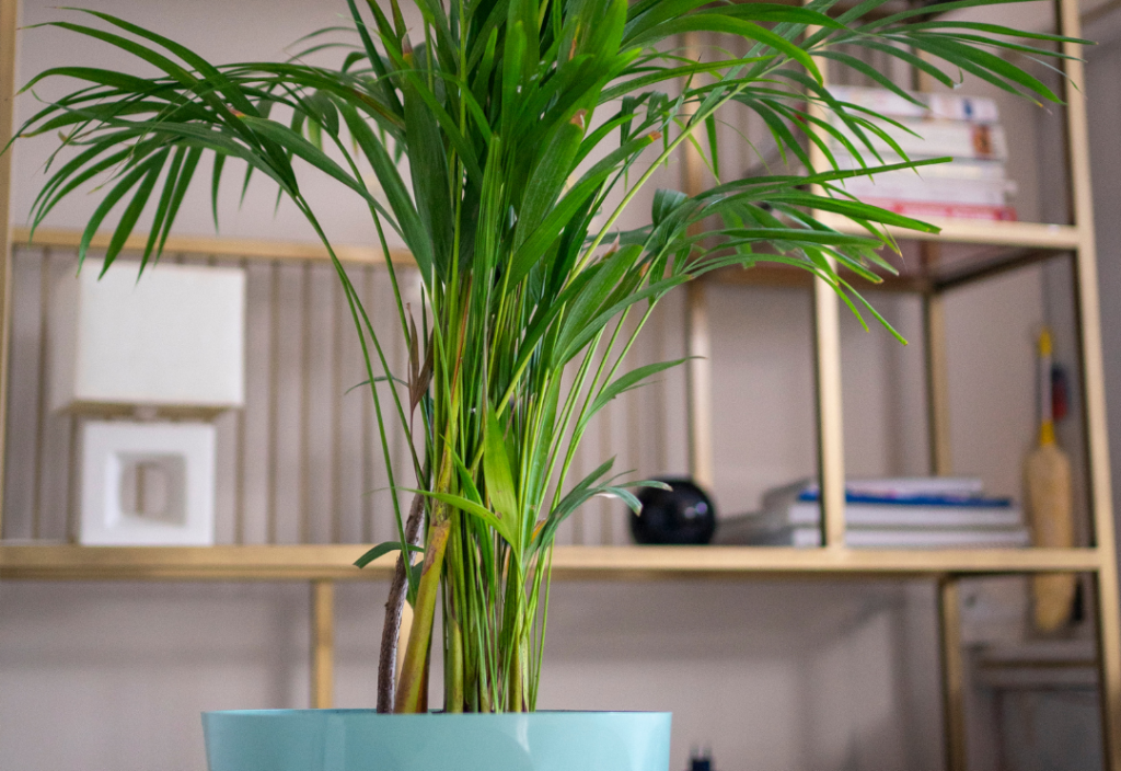 History of the Bamboo Palm as a Houseplant
