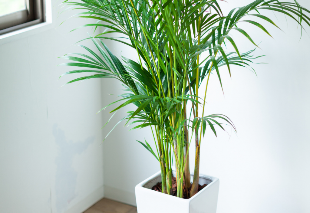 The Best Environment for Bamboo Palms