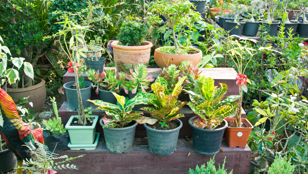 1. Avoid getting too many plants at one time