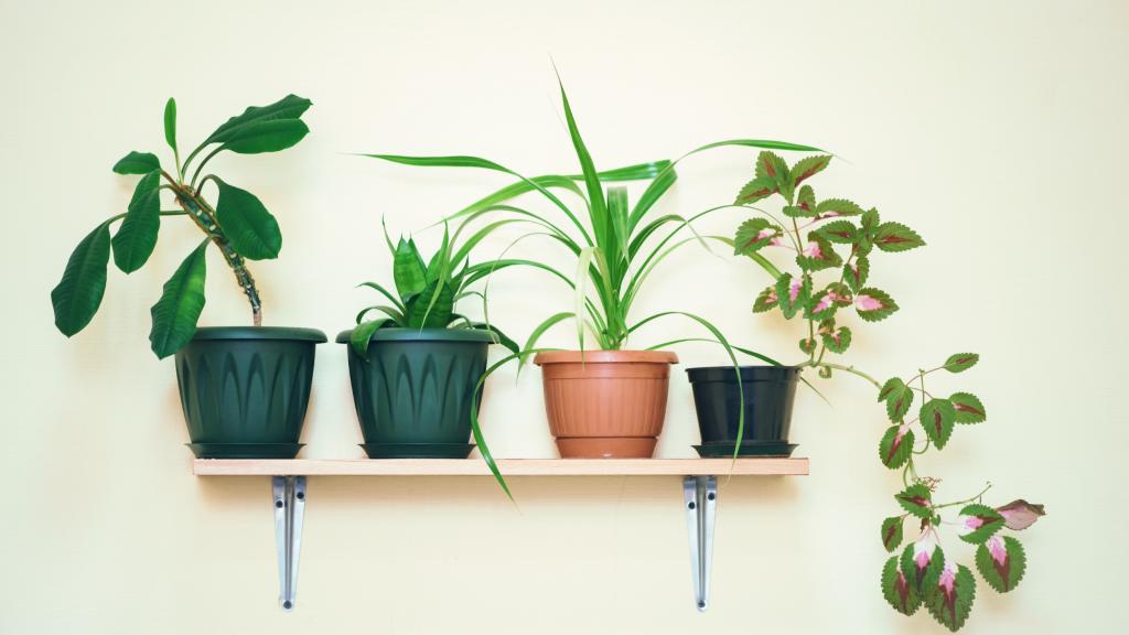 2. Choosing plant varieties based on popularity or looks