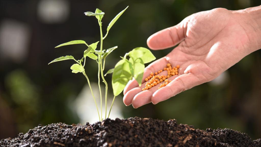 11. Not fertilizing your plants