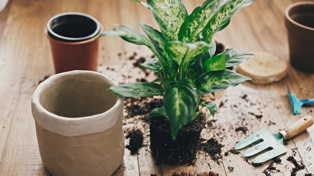 12. Repotting too often or too late