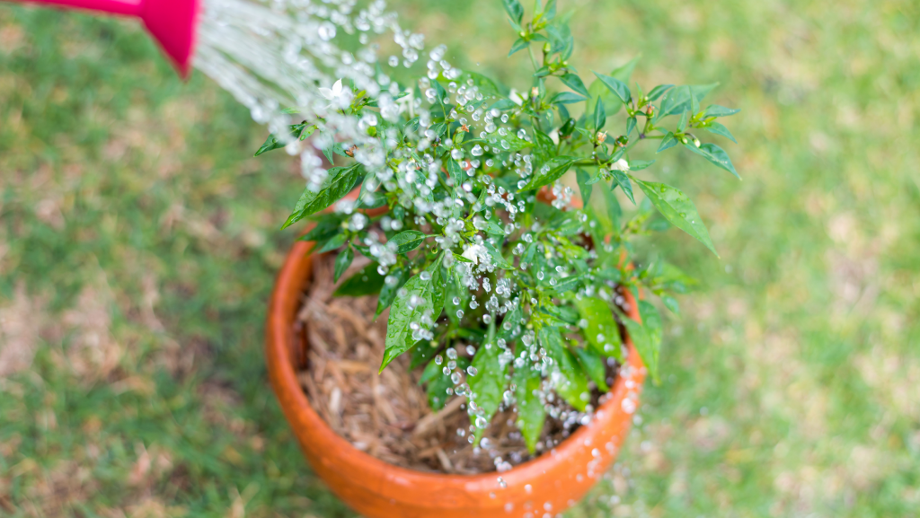 5. Watering on a strict schedule