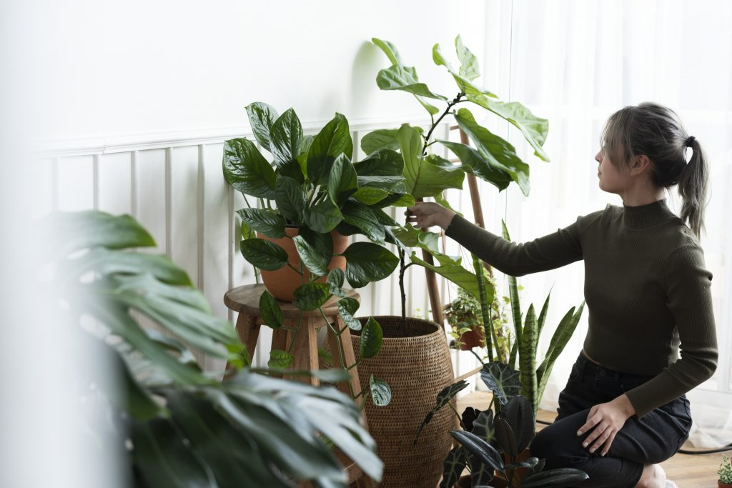 Woman tending and caring for her plant for winter