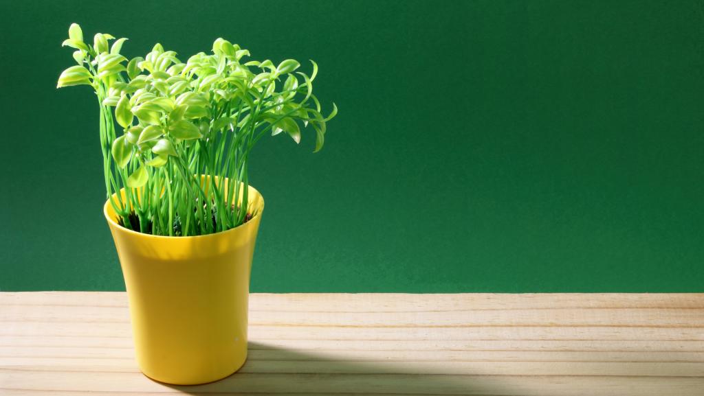 Preventing Indoor Plants