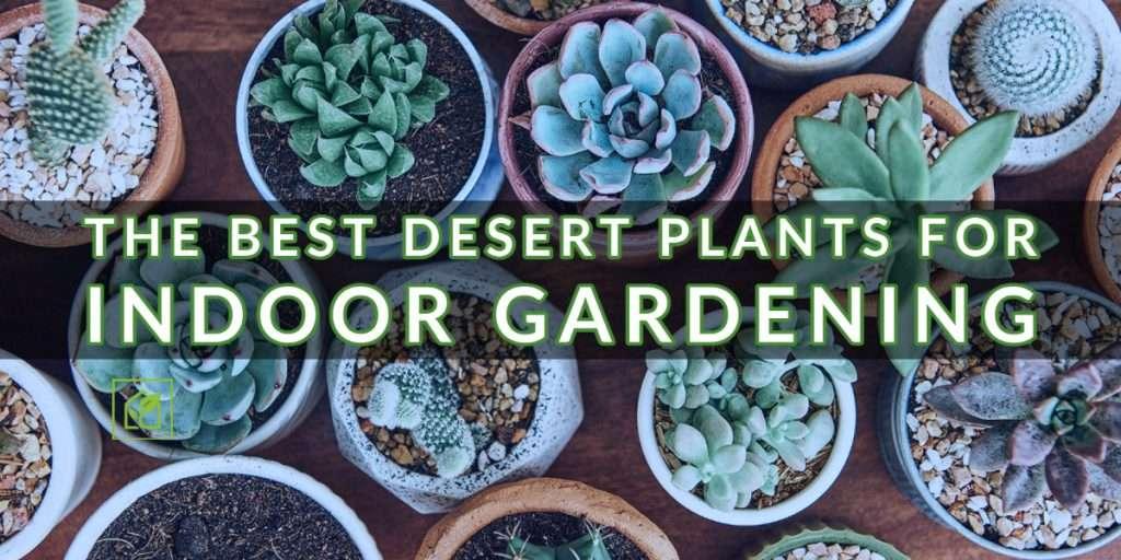 desert plant indoor garden