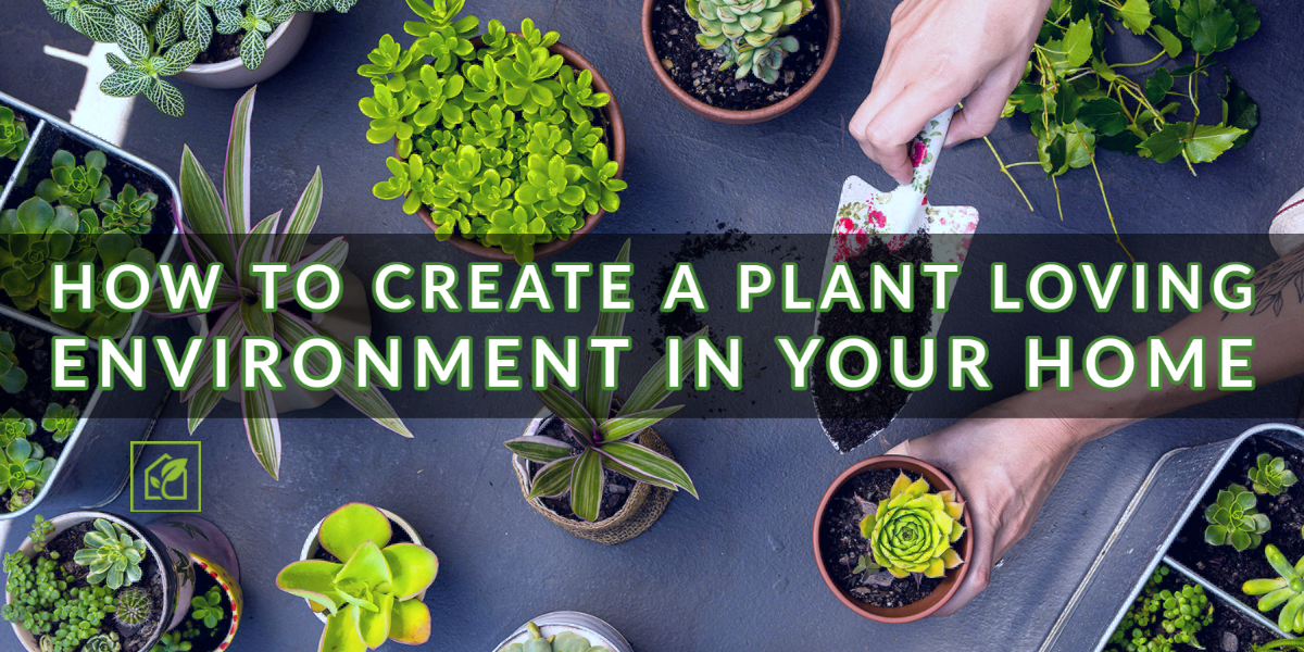 How To Create A Plant Loving Environment In Your Home