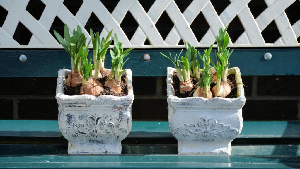 How to Pot Flower Bulbs