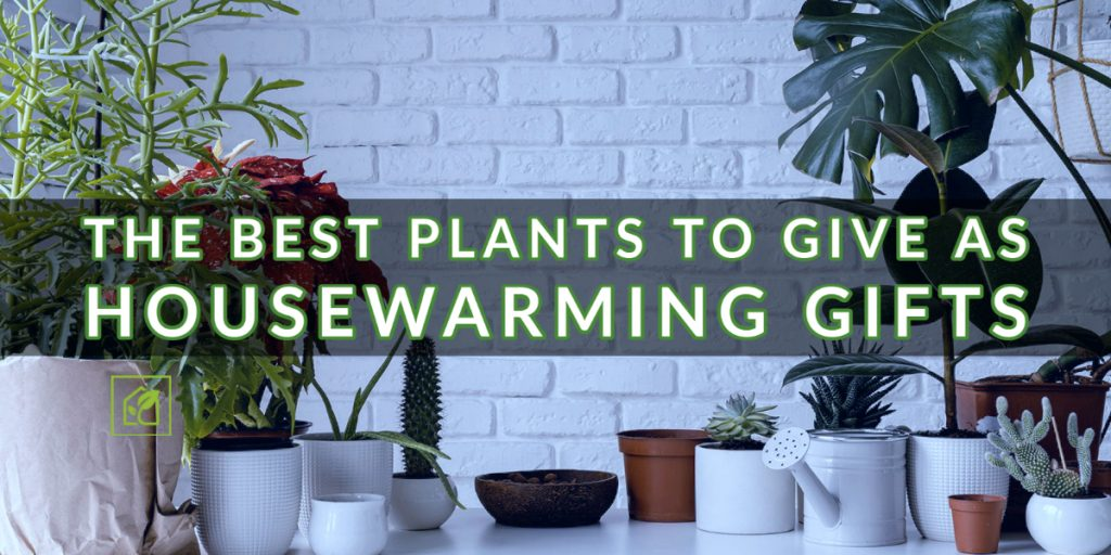 Plants to Give As Housewarming Gifts