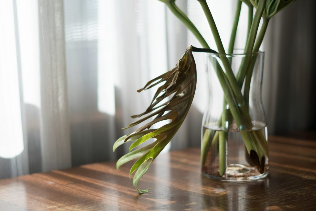 Common Reasons Indoor Plants Die