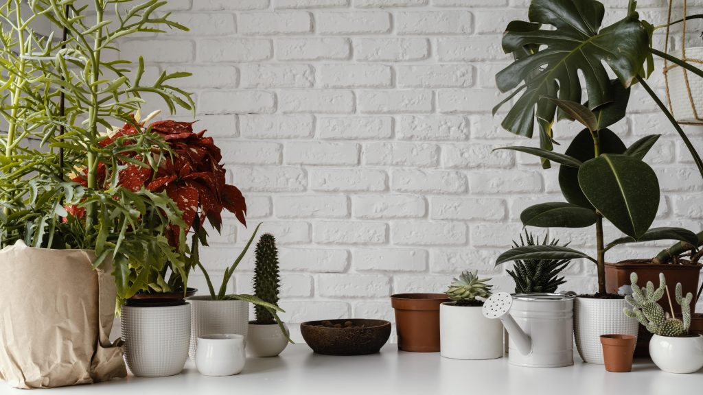 Create A Plant-Loving Environment Indoors