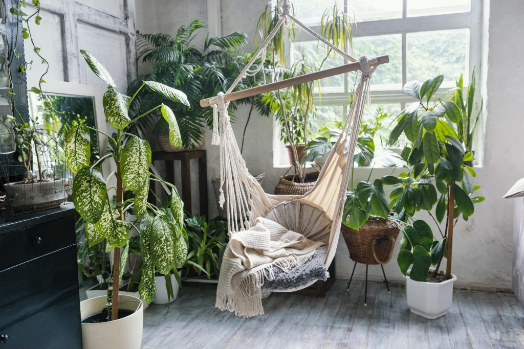 What Are Indoor Plants?