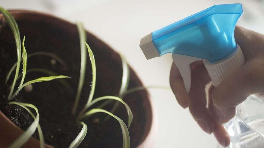 Bug Spray Considerations for Eco-Friendly Indoor Gardening