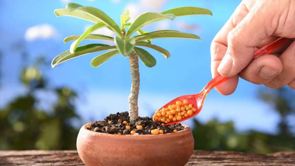 Fertilizer for Eco-Friendly Indoor Gardening