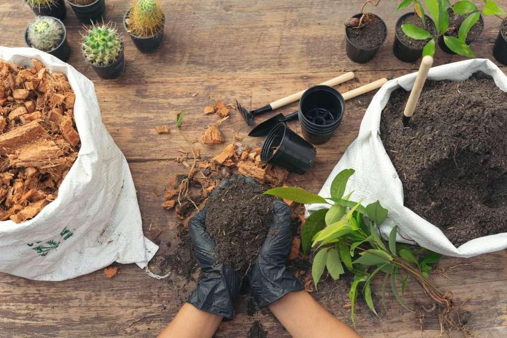 Gather Succulent Supplies