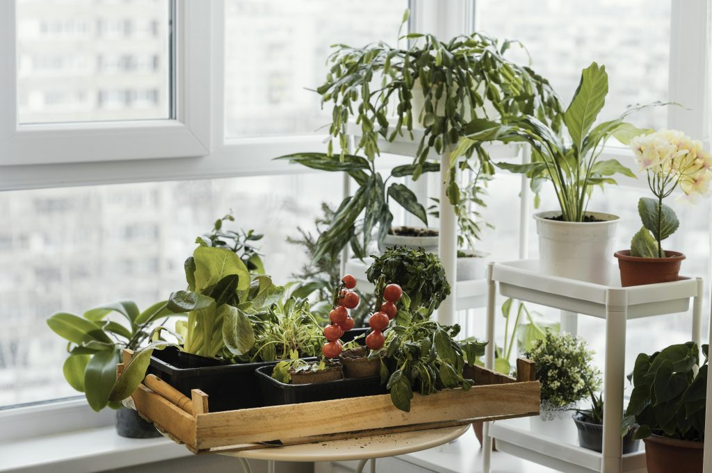 What To Grow for Eco-Friendly Indoor Gardening